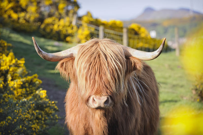 A TREKKER'S GUIDE TO THE SCOTLAND HIGHLANDS WITH MOUNTAIN MADNESS BUFFALO