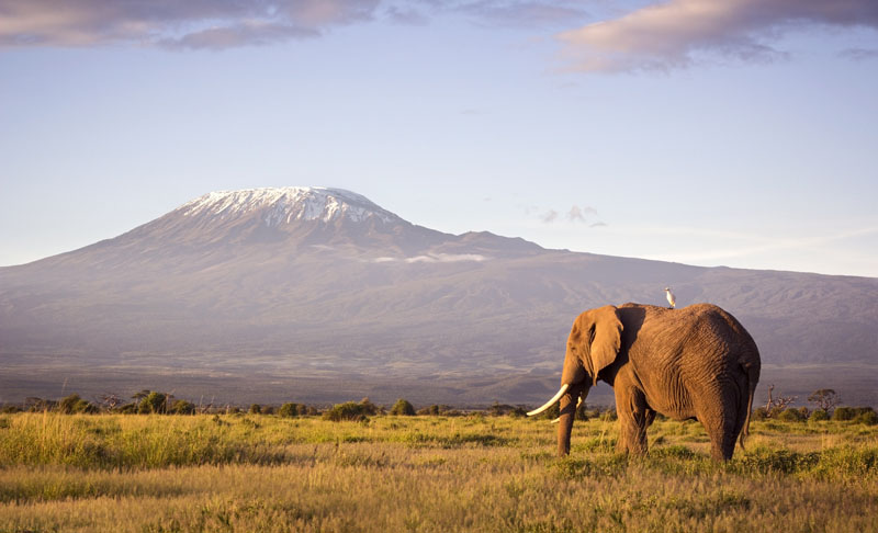 Kilimanjaro Climb and Safari Mountain Madness