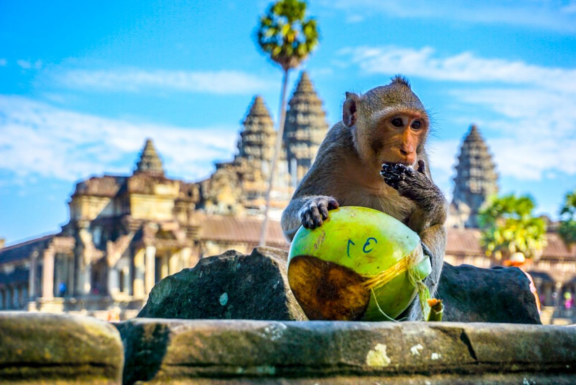 A Mindful Approach of Appreciating Our Surroundings with Kevin Eassa Monkey Coconut